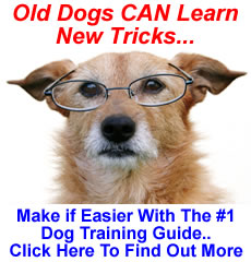 Training Older Dogs