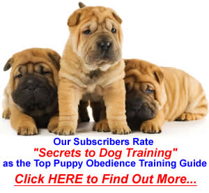 #1 Puppy Obedience Training